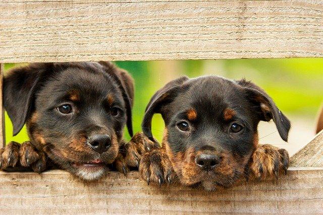 Sacs à puces-2 chiens